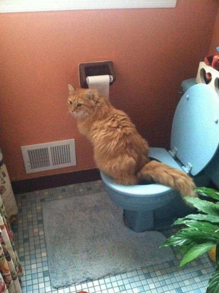 18 кошек, которые точно знают, как быть победителем по жизни (18 фото)