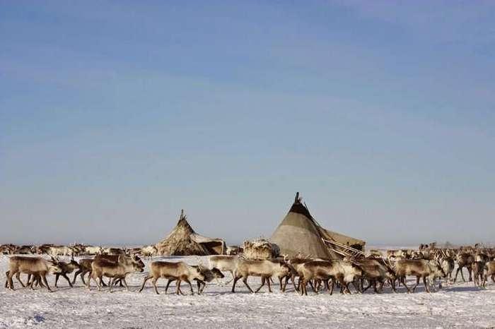 Интересные истории: как писают в тундре