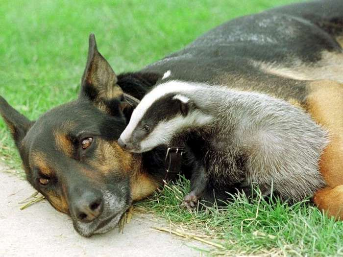 Усыновление среди животных