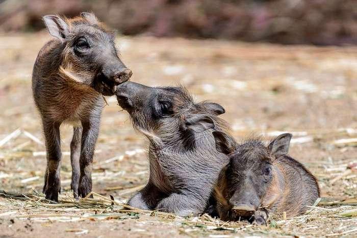 Интересные фотографии с животными, которые были сделаны на прошлой неделе