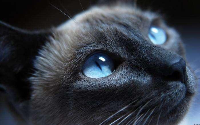 Интересные факты о кошках (20 фото)