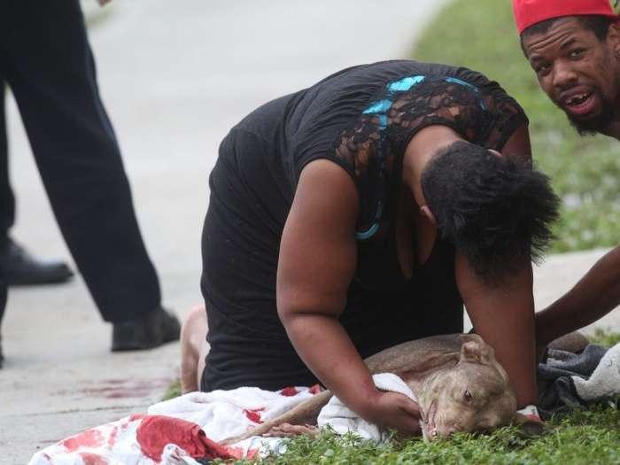 Собака отдала жизнь, чтобы спасти хозяйку (12 фото)