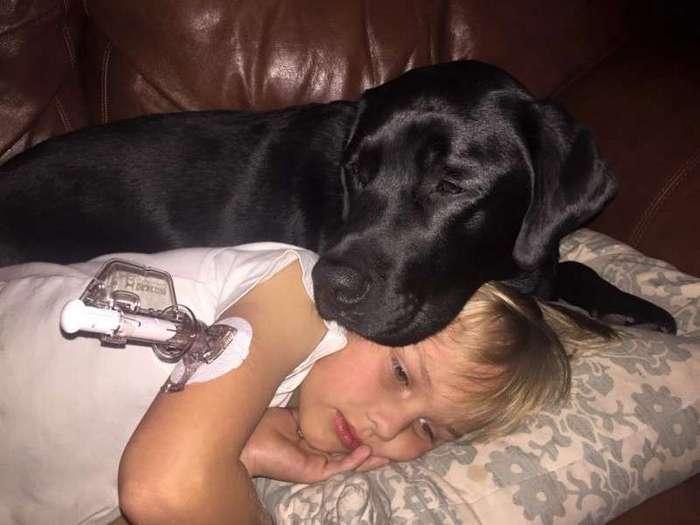 Пес–хранитель