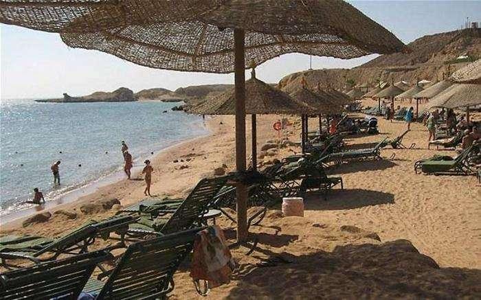 Нападения акул на туристов в Египте (15 фото)