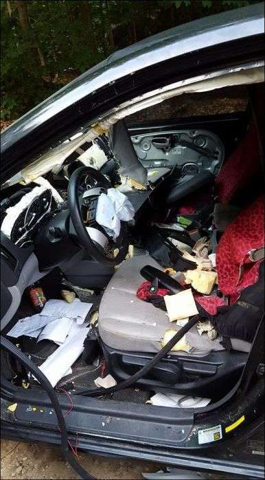 В поисках еды медведь уничтожил салон автомобиля (9 фото)