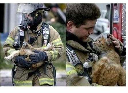 Коты, спасенные пожарными (15 фото)