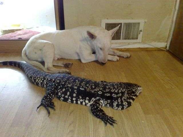 Домашние рептилии (40 фото)