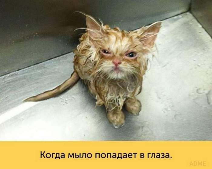 Кошки, которые достойны «Оскара»