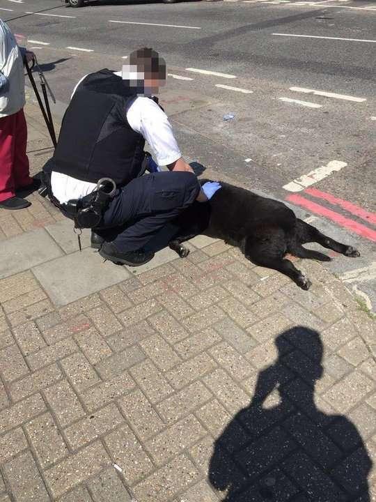 Настоящая дикость — женщина таскала за собой мёртвую сбаку