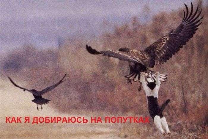Подборка прикольных фото №1375 (113 фото)