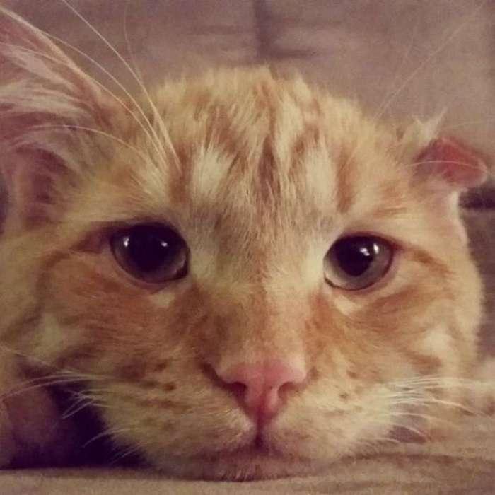 Как спасли самого несчастного в мире кота