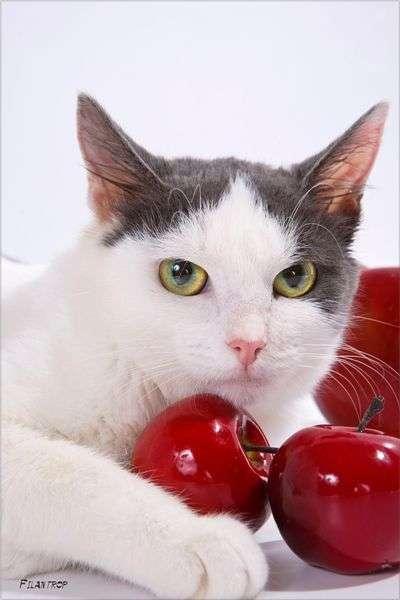 Судьба беспризорных котов (26 фото)
