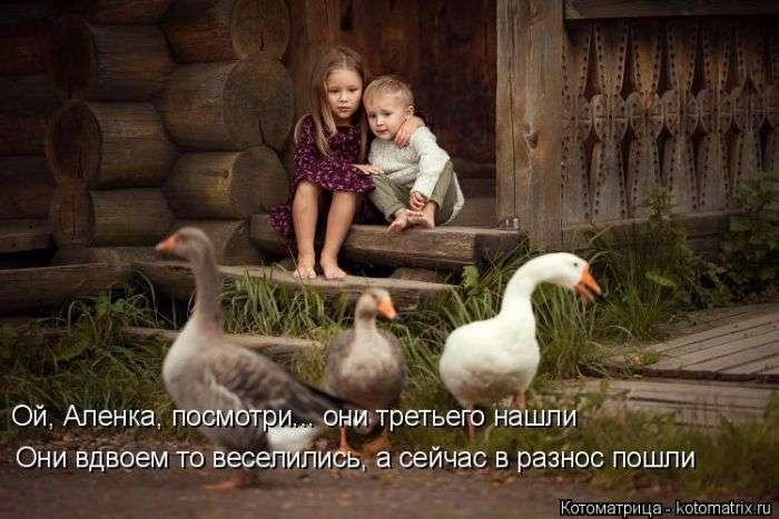 Домашние любимцы (50 фото)