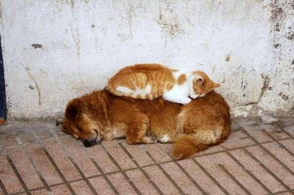 Забавные спящие питомцы (18 фото)
