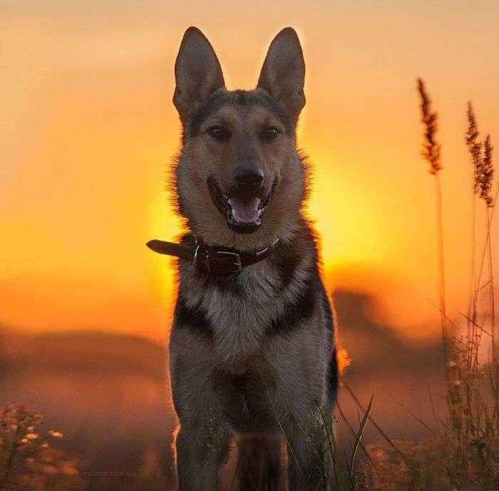 Фотографии животных от Сергея Полюшко (30 фото)