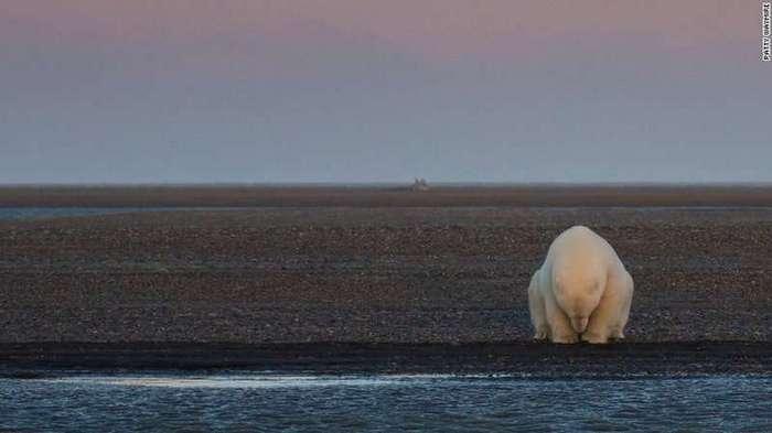 Вот так на самом деле выглядит изменение климата