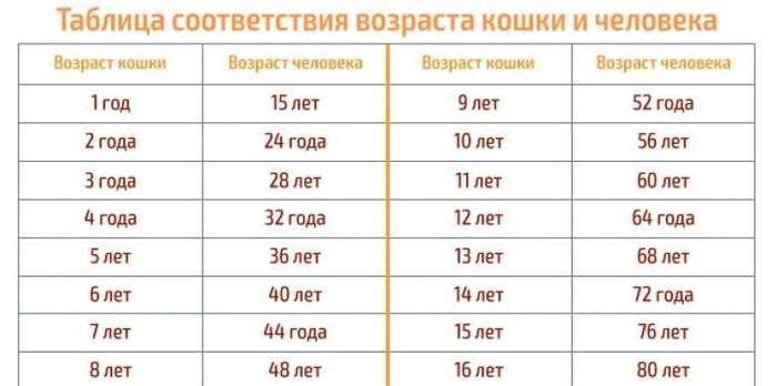 Сколько лет вашему питомцу по человеческим меркам?