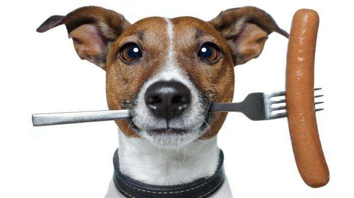 Разновидность кормов для собак: советы по выбору (4 фото)