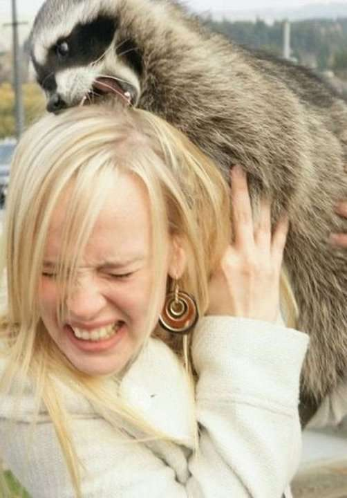 Девушки и животные не всегда уживаются мирно