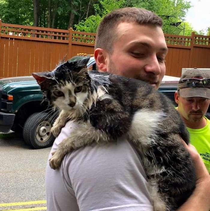 Спасение застрявшей кошки