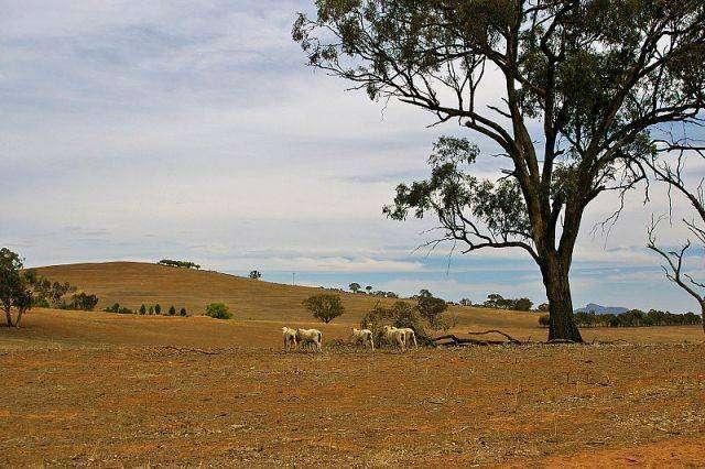 20 сумасшедших фактов об Австралии