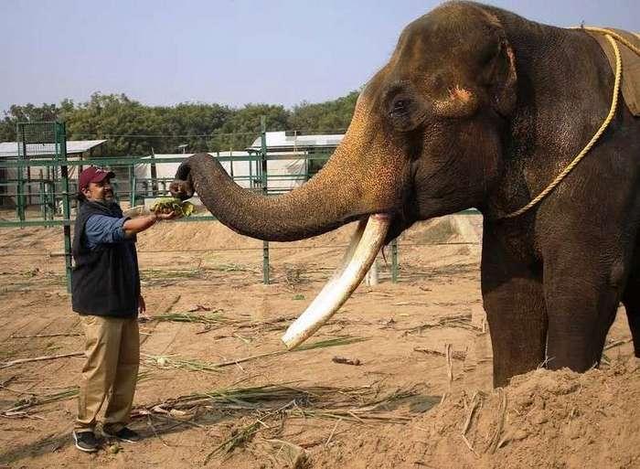 История о слоне, которые провел много лет в темной каменной комнате