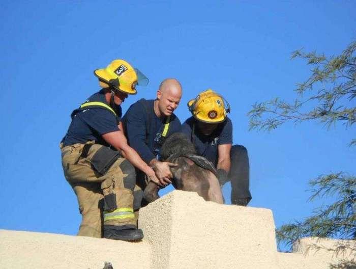 Спасатели вытащили из дымохода мужика, забывшего дома ключи