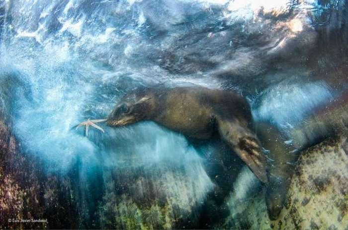 «Переплетённые жизни»: лондонский музей выбрал лучшие снимки дикой природы за 2016 год