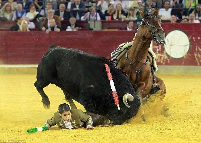 Женщина-матадор, которая любит убивать быков и отрезать им уши, поплатилась