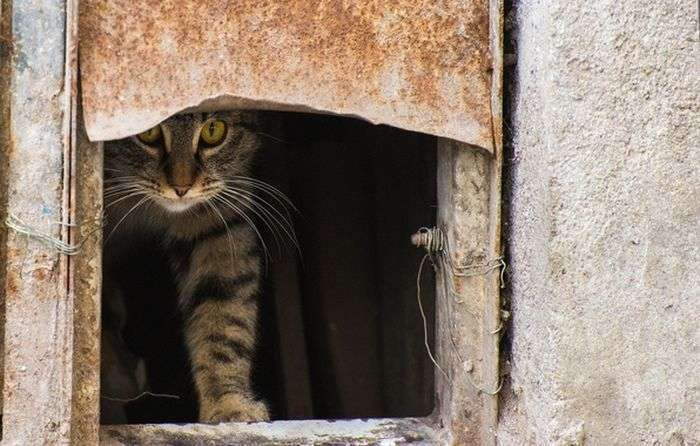 Любопытные коты