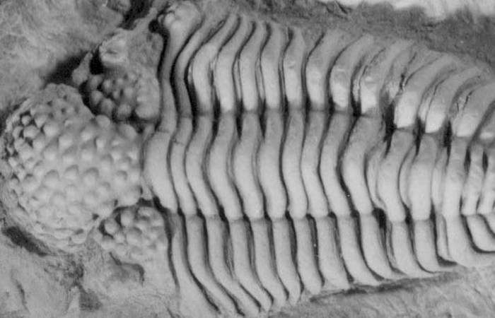 10 прекрасно сохранившихся останков вымерших животных, которые удивили учёных
