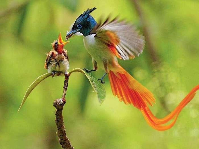 10 животных с самой яркой окраской
