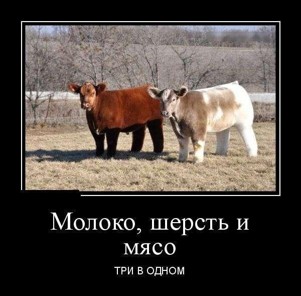 Демотиваторы №1390 (30 фото)