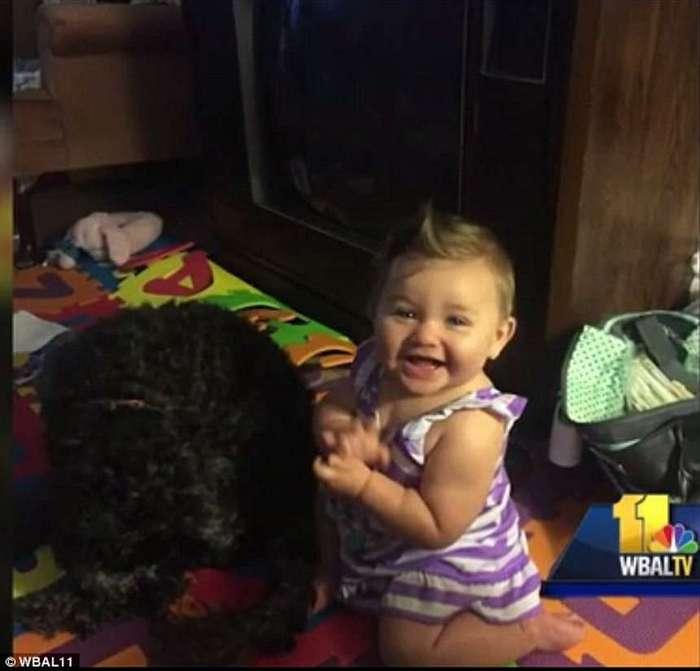 Домашний любимец пес Поло спас маленькую хозяйку от пожара ценой своей жизни