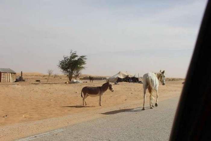 Месяц экстрима: на Оке в Африку