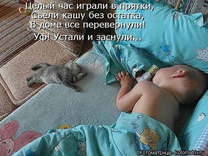 Забавные котики (50 фото)
