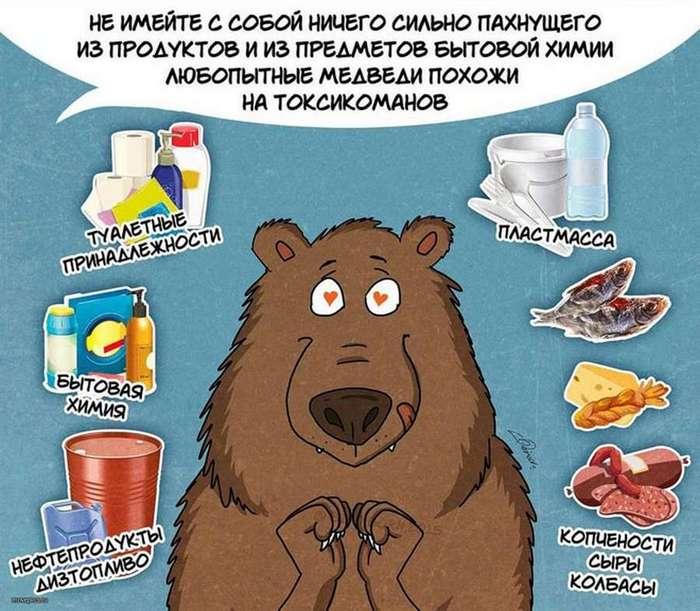 Забавные комиксы о правилах поведения с медведями