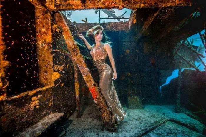 Впечатляющая фотосессия с акулами (19 фото)