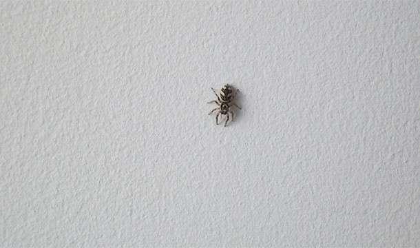 Почему пауки одновременно пугают и притягивают нас (25 фото)