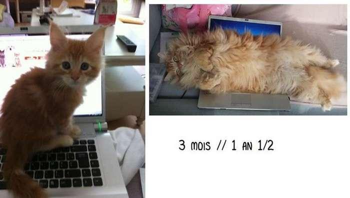 25 котят, которые так быстро выросли (25 фото)