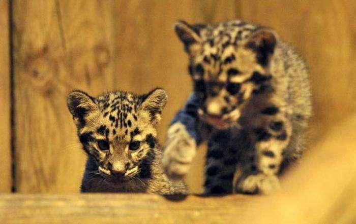 Милые животные (21 фото)