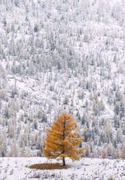 Волшебные зимние фото (30 фото)