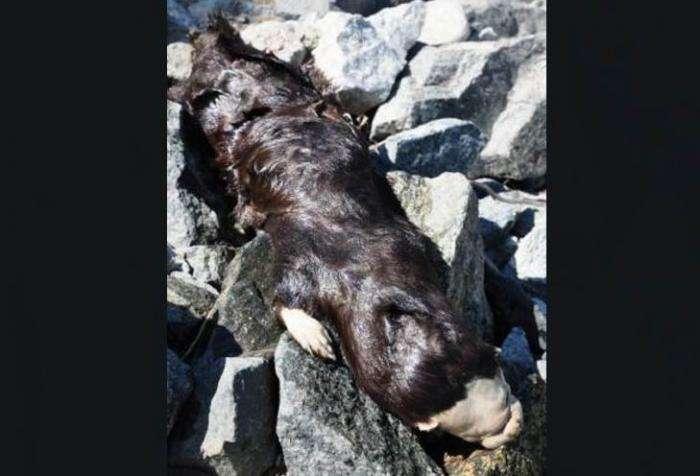 Таинственный зверь на берегу (6 фото)
