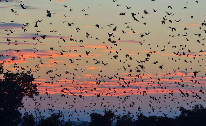 Миграции: великие путешествия обычных животных