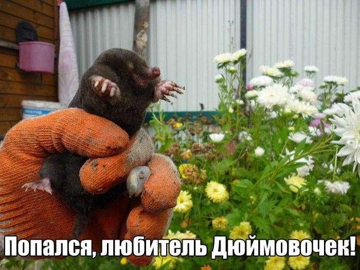 Подборка прикольных фото №1378 (107 фото)