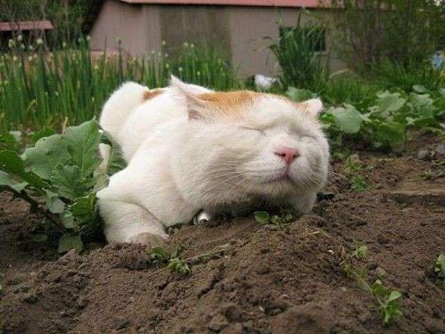 Самый ленивый в мире кот (24 фото)