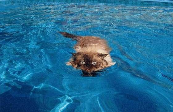Кошки и вода (29 фото)