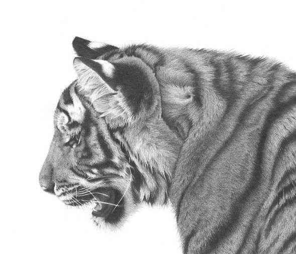 Карандашные рисунки (28 фото)