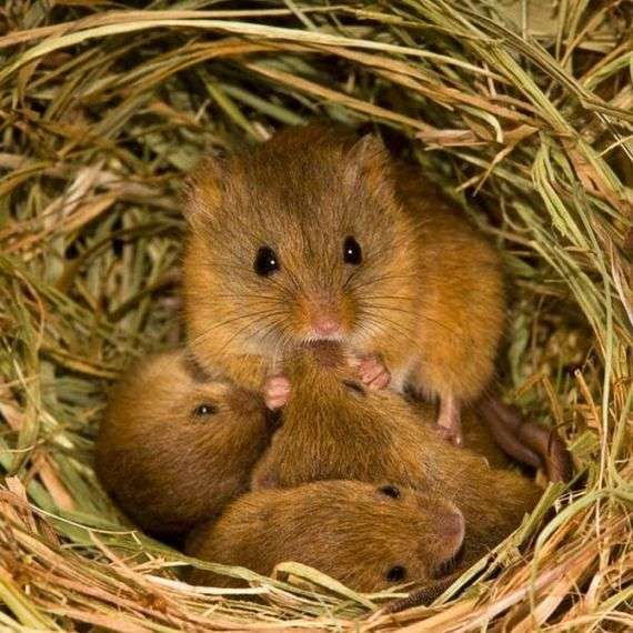 Немного из жизни мышей (17 фото)