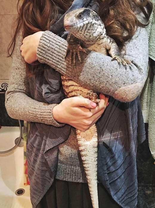 Холоднокровное, но любящее животное: степной варан – отличный домашний питомец (16 фото)